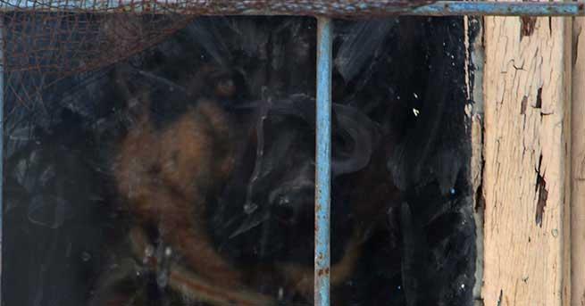 Köhne binada kilitli tutulan köpek kurtarıldı