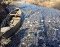 Eber'de toplu balık ölümleri