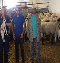 Çay'da çalınan hayvanlar Çobanlar'da bulundu