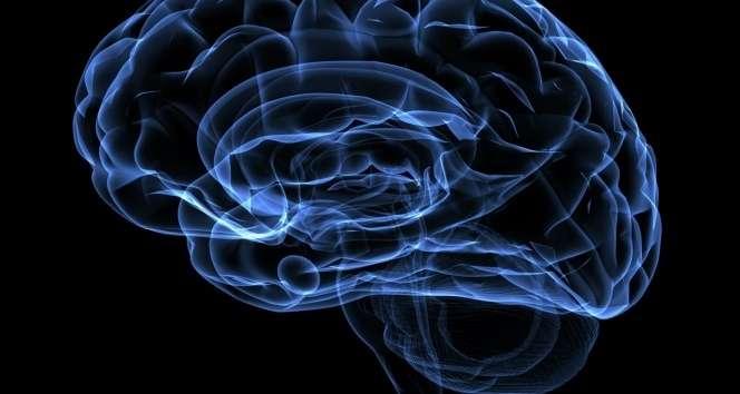 Kullanılmayan beynin kapasitesi azalıyor