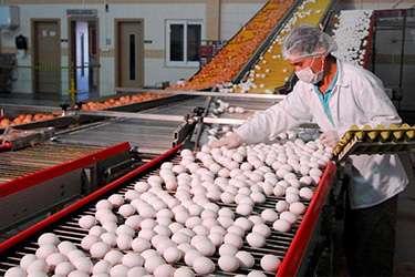 Yumurtada KDV Yüzde 8'den Yüzde 1'e düştü