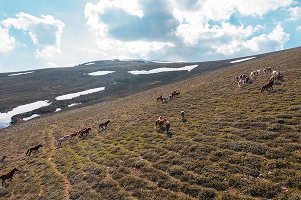 Emirdağ yaylalarında havadan görüntülenen yılkı atları büyüledi