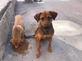 Afyonkarahisar'da sokak hayvanları unutulmadı