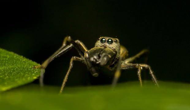 Bilim Kurulu üyesi açıkladı: Böceklerden koronavirüs bulaşır mı?