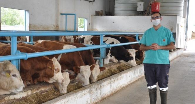 Tedavi için gittiği hayvan çiftliklerinden etkilendi ve kendi çiftliğini kurdu